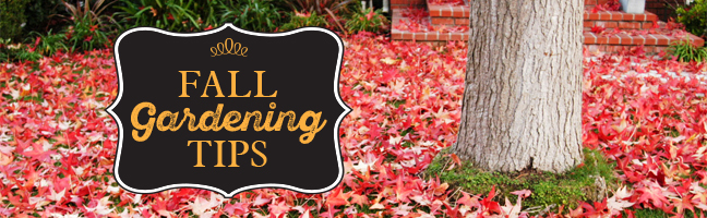 red leaves on lawn around tree trunk, Fall gardening tips