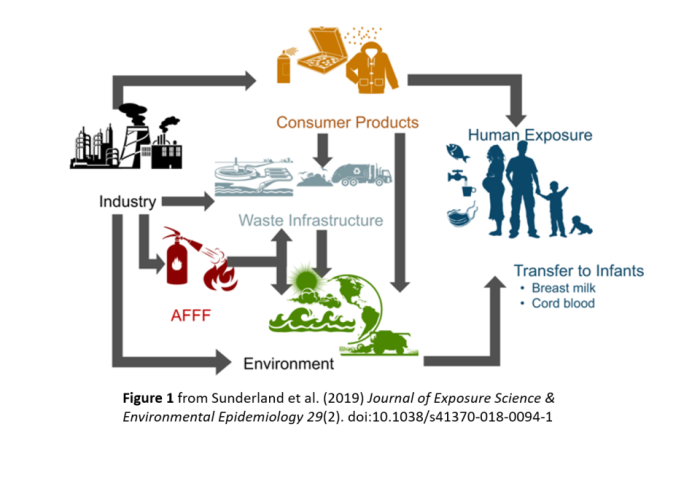 Graphic showing how PFAS is exposed to humans via industry, consumer products, waste infrastructure, firefighting foam, and the environment.